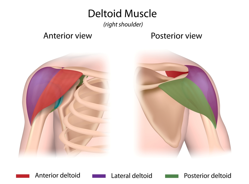 Shoulder Joint Health: Caring for your Rotator Cuff | OCR NATION